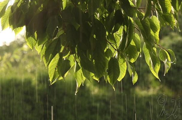 Déšť.